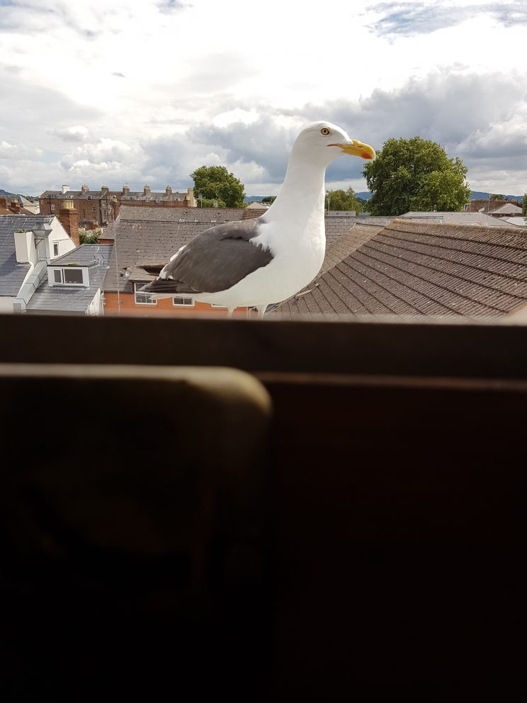 """Steve """"Sea Gull"""""""